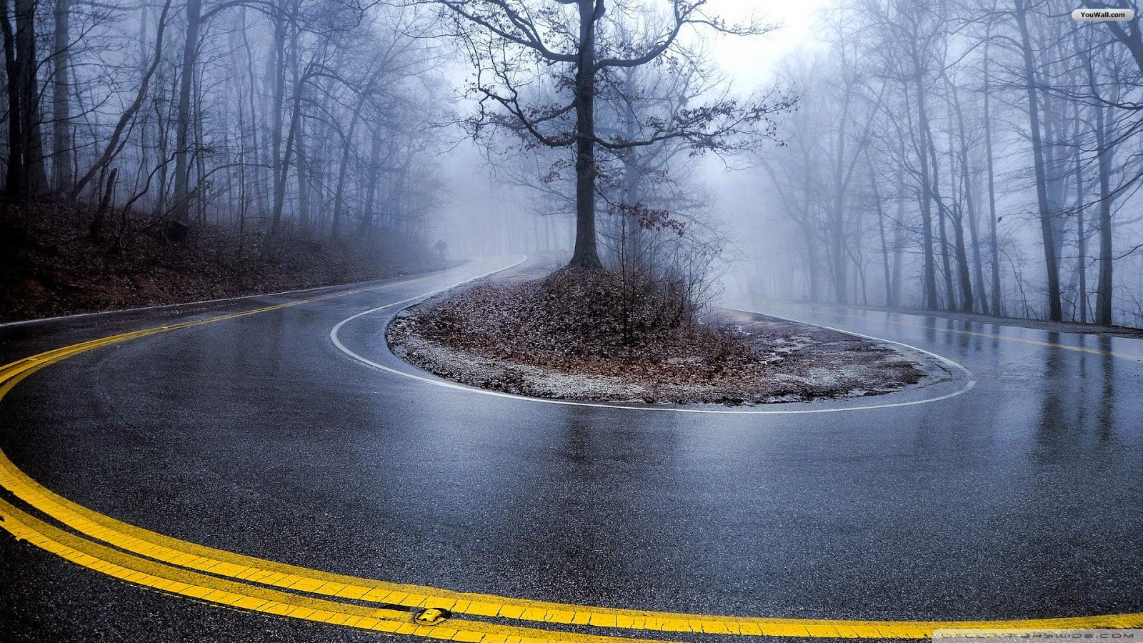 road fog trees autumn