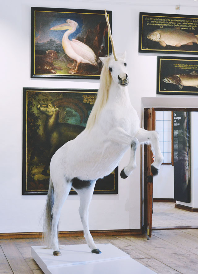 Taxidermy unicorn