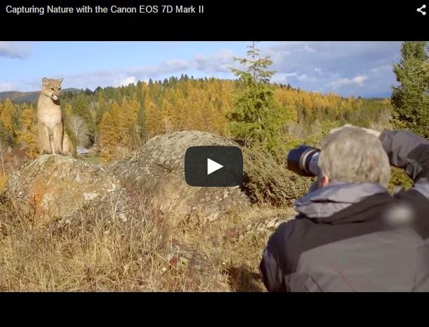 Capturing Nature with the Canon EOS 7D Mark II - YouTube Video
