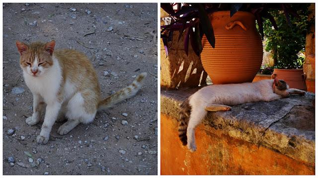 greckie koty w klasztorze, Kreta