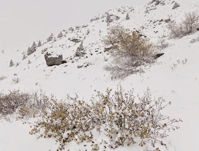 Refugio camuflado en los alpes Suizos