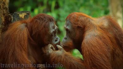 Endemic wildlife Indonesia