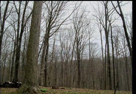 Οι αλλαγές των εποχών στο δάσος σε ένα απίθανο βίντεο!
