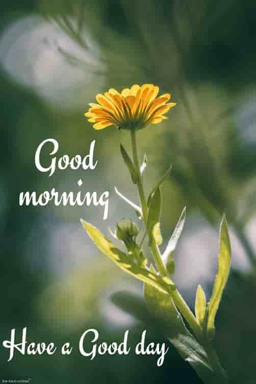good morning pic of yellow flower