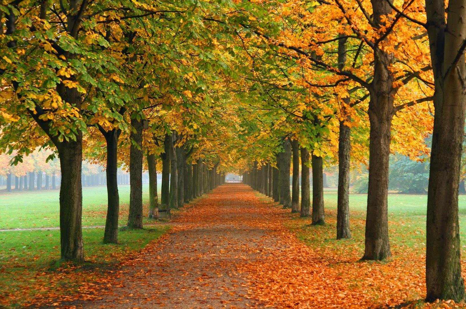 Picture Gallery Autumn Desktop Wallpaper 2014