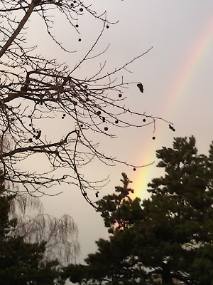 Photo of gray skies, tree branches, and dim rainbow