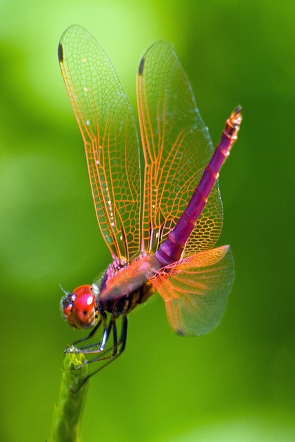 The Coolest And Most Beautiful In Nature Of Insects Photos