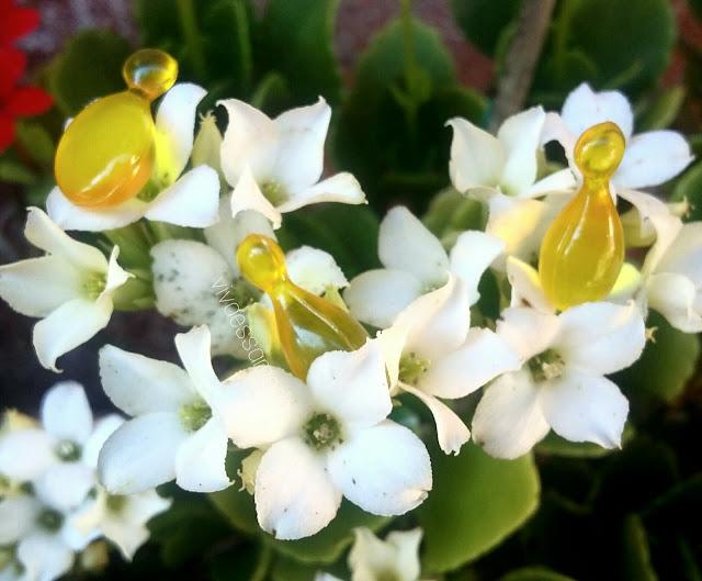 30-cápsulas-fortificantes-Natura-Plant-resenha-viva-essa-moda