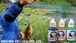Essen Oplosan Paling Ampuh Untuk Ikan Nila