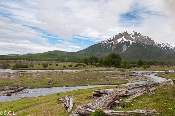 Castores Ushuaia. La plaga de la tierra de fuego