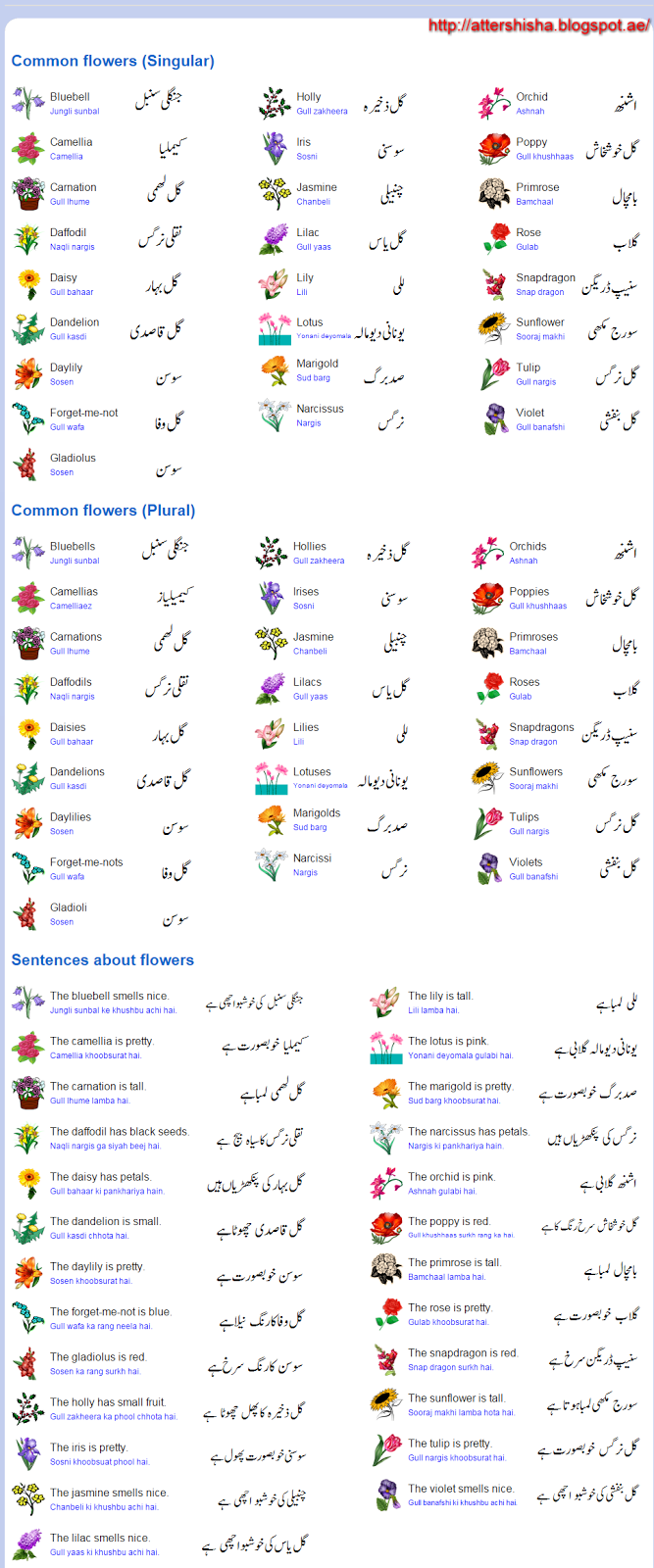 Speaking pdf english urdu rapidex course