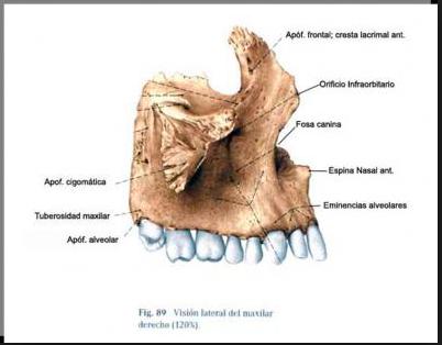 UD2 Anatomía UI1: Huesos pares e impares de la cara.