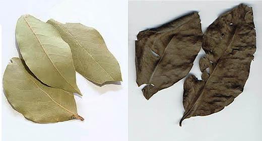 Proses pengeringan daun salam sebagai obat asam urat