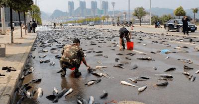 Lluvia de peces en Tailandia