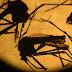 Diferença entre dengue, Zika e chikungunya é sutil