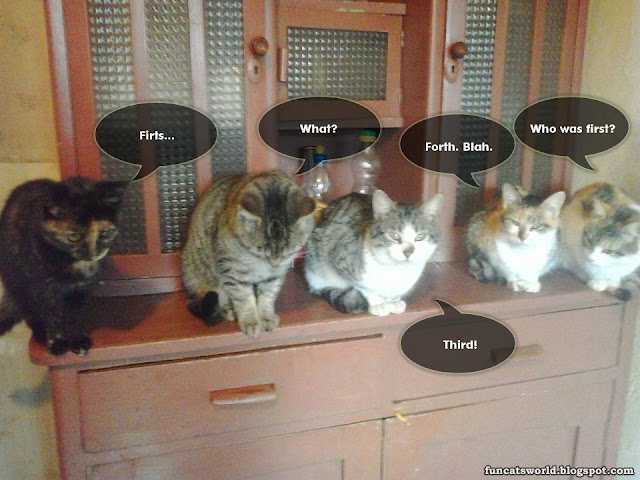 Five Cats Counting