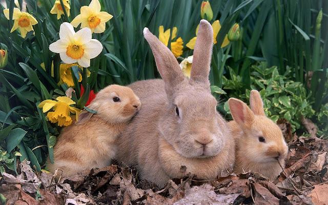 Foto konijnen familie