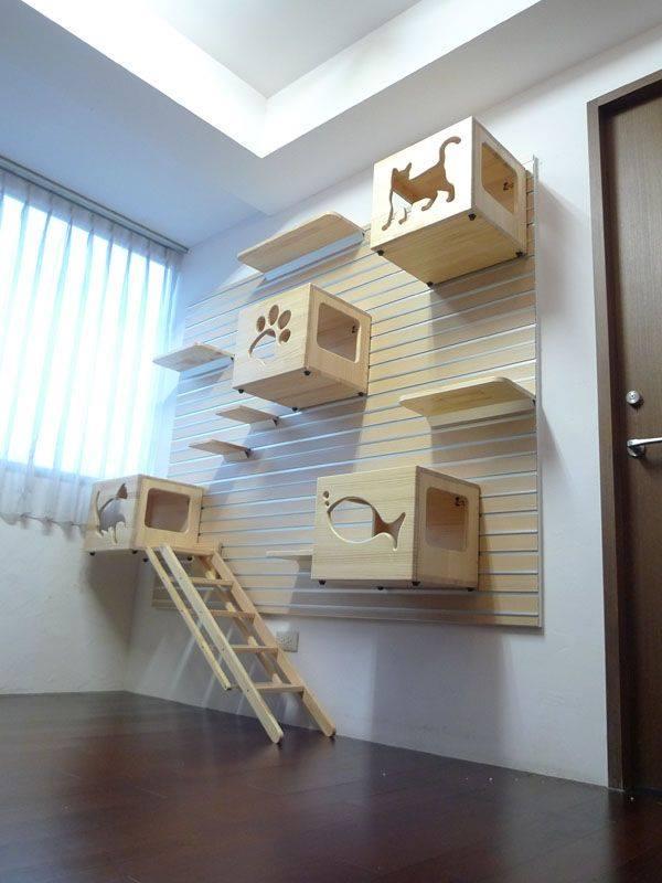 Desain Rumah Kucing