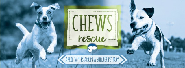 barkworthies chews rescue supports dogs in 3 shelters