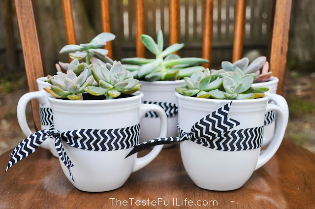 DIY Succulent in a mug for $6