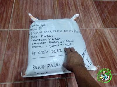 Benih Padi TRISAKTI Pesanan  MUNIF Banyuwangi, Jawa Timur    (Sesudah di Packing)