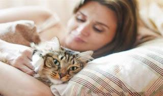 Kedi-Kilinin-Kirilmasi