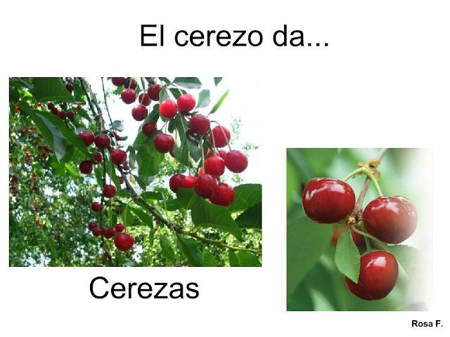 Imagenes Animadas De Arboles De Mango: Maestra De Infantil: Árboles Frutales. Vocabulario En Imágenes