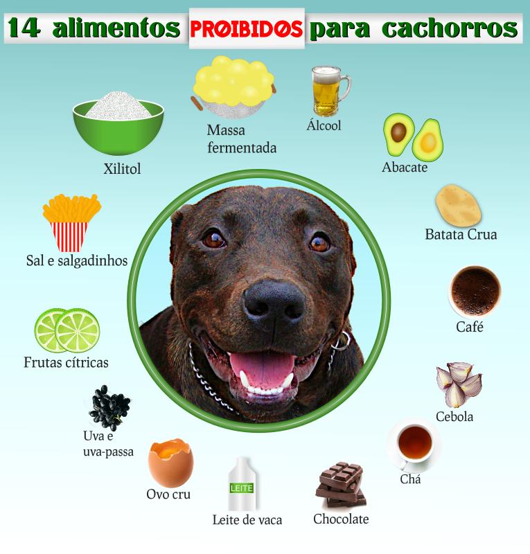 14 alimentos proibidos para cachorros