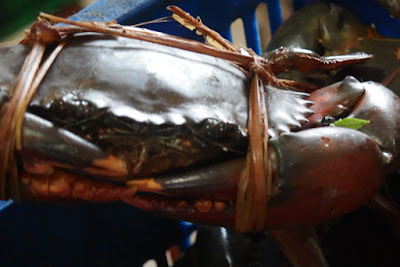 Mud Crab Export Opportunity for Shore Business