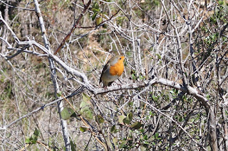Casa rural La Toba - turismo ornitológico