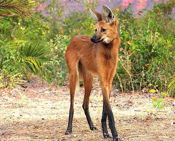 10 Jenis binatang paling unik