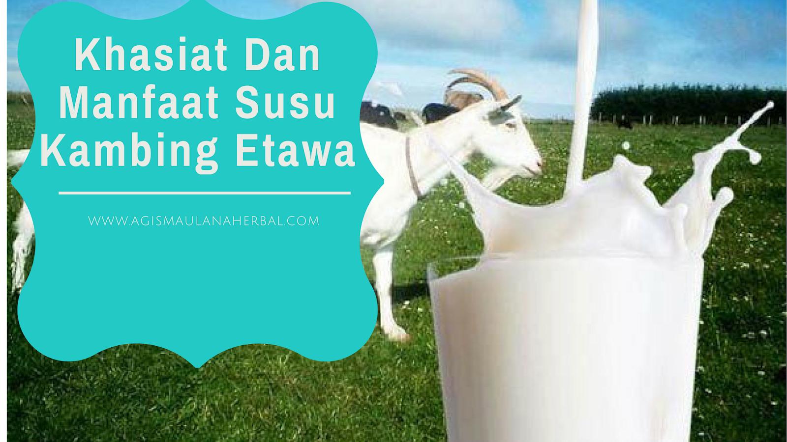 Susu Kambing Etawa Bubuk ETAKU