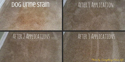 Best Cleaning Product For Pet Stains