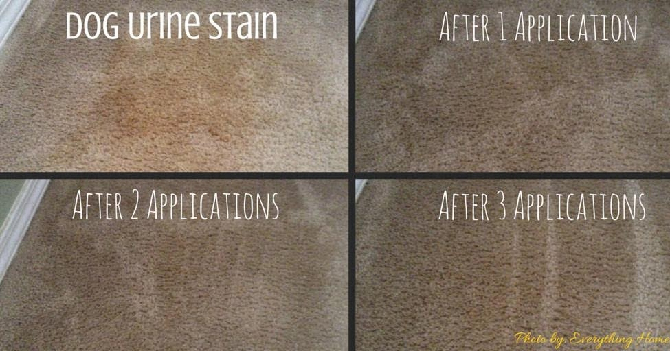 How To Get Old Pet Stains Out Of Carpet Mycoffeepot Org