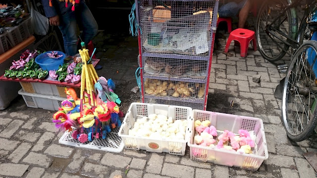 Street Side Pet Shop, Colored Chicks, Bogor - Image: Author
