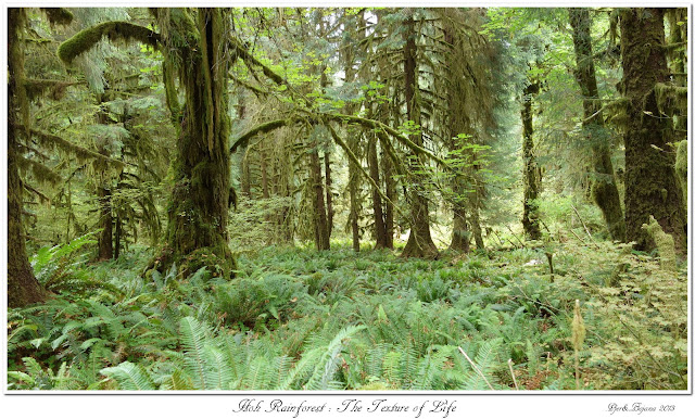 Hoh Rainforest: The Texture of Life