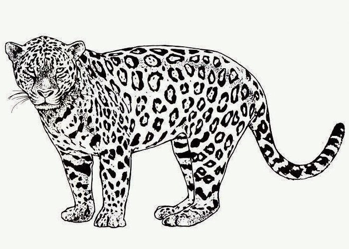 Cheetah coloring page free coloring pages and coloring for Free cheetah coloring pages