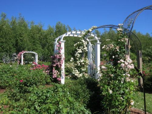 Stan Hywet Rose Garden