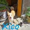 Xico: Para adopção responsável