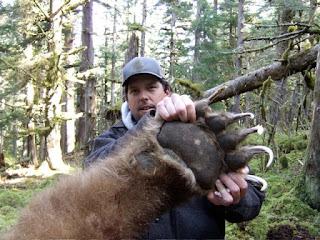 Garra gigante de un oso Grizzly