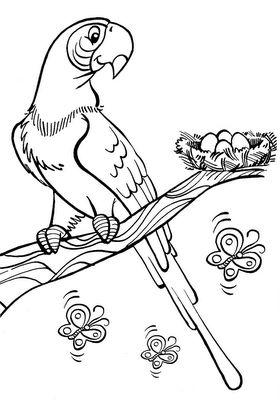 Desenho De Arara Com Ovos No Ninho Para Colorir Desenhos Para