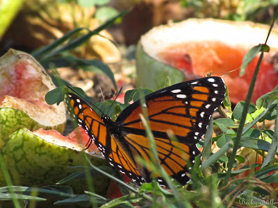 The caterpillar becomes the butterfly just as we go from sleeping to spiritually awake beings.