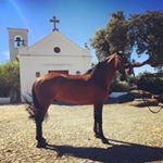 instagram travel thursday, riitta reissaa, lusitano, portugal,