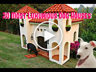 20 Most Luxurious Dog Houses (Most Expensive Dog Houses), luxury and fancy dog houses, extravagant dog houses