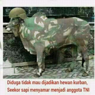 Kumpulan Gambar Meme DP BBM Gokil Idhul Adha Hari Kurban Terbaru 2018