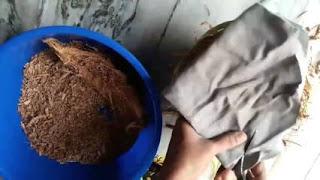 jual sabut kelapa