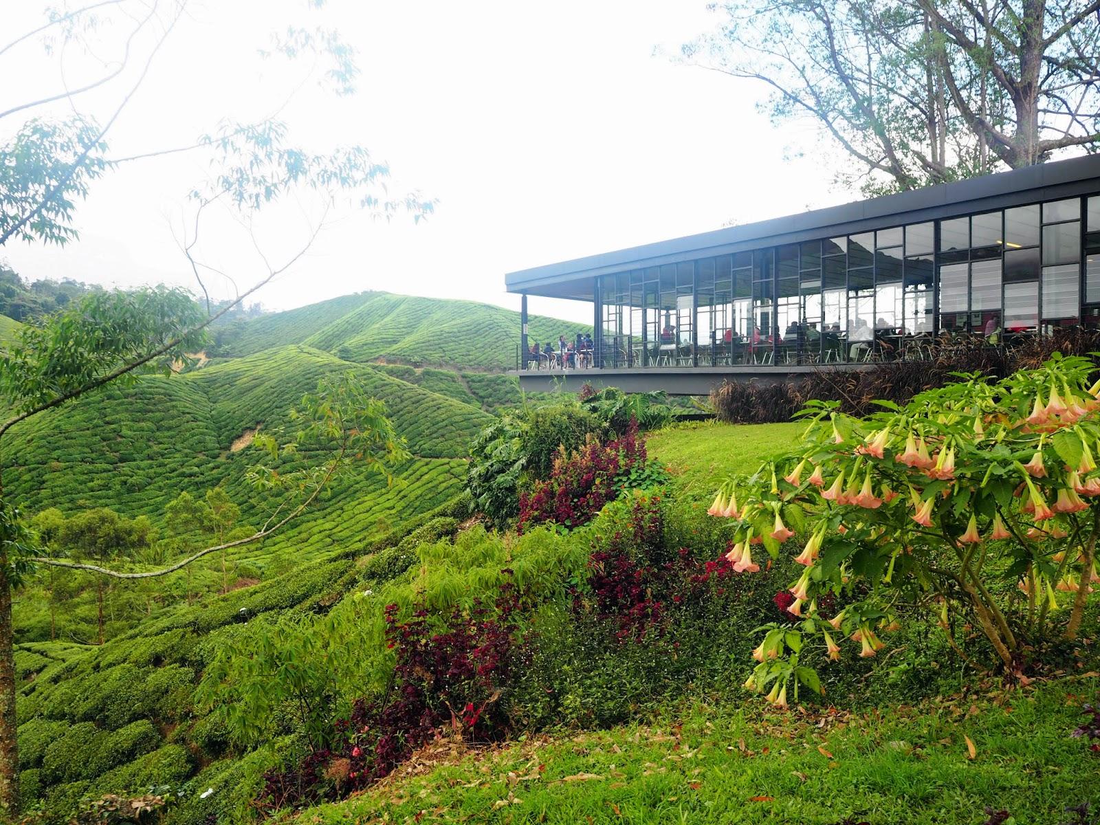 Boh Tea House