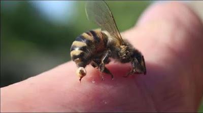 Những cách xử lý kịp thời hiệu quả khi bị ong đốt tránh trường hợp bị suy tạng