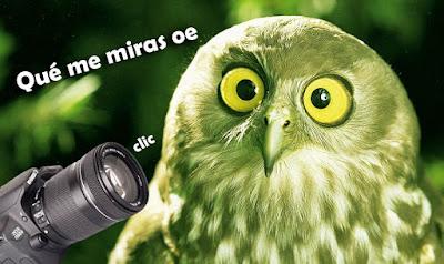 Pajarerismo - Birdwatching (Foto: Internet)