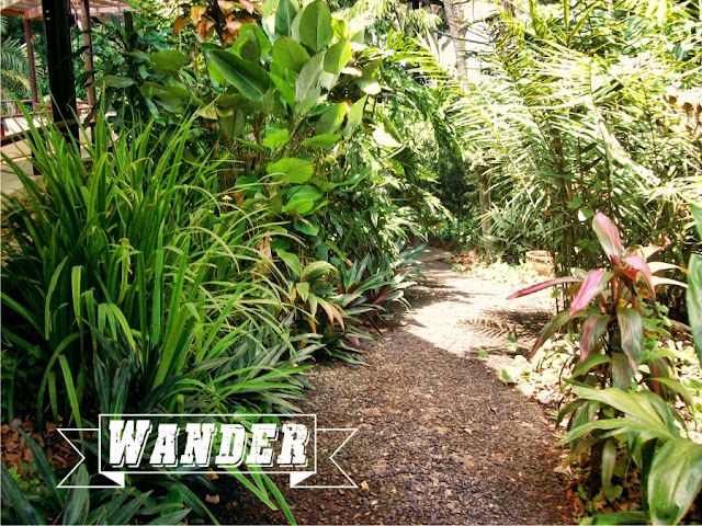 Wander Makiling Botanic Garden